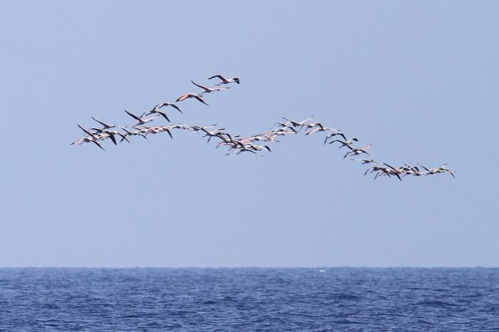 flamingos_bbo_bm